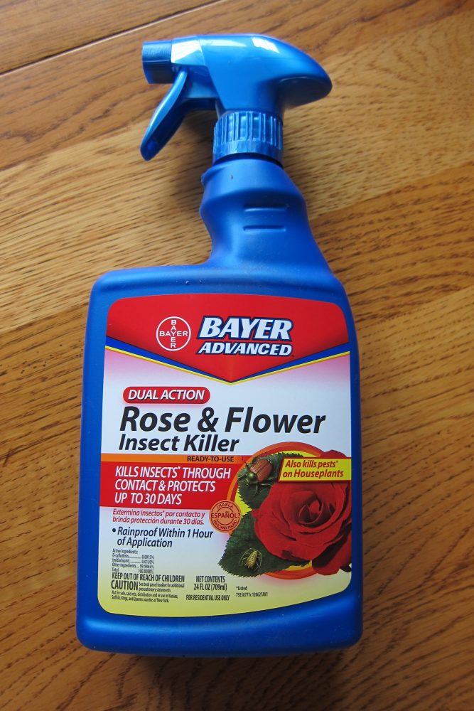 Bayer Rose And Flower Insect Killer For Mealybugs Girls In White Dresses