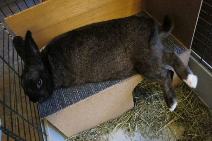 large rabbit flopped on roof of house