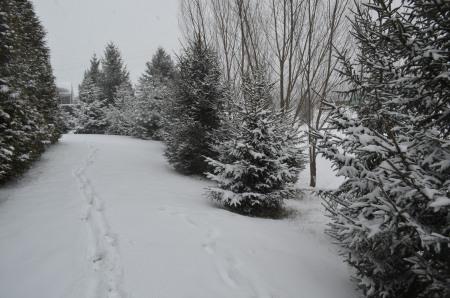 Indiana snowfall